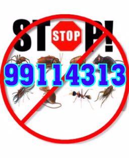 مكافحة حشرات جميع مناطق الكويت