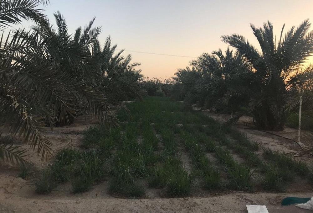 للبيع مزارع في العبدلي