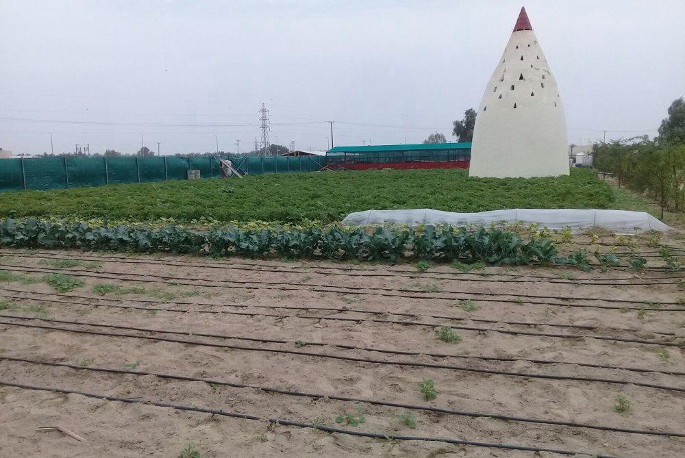 مزرعه جاهزه وجميله جدا للجادين فقط لعدم الازعاح رجاء