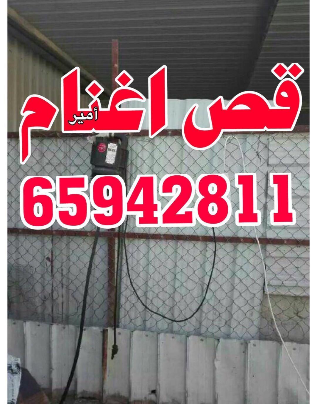 قص اغنام امير 65942811