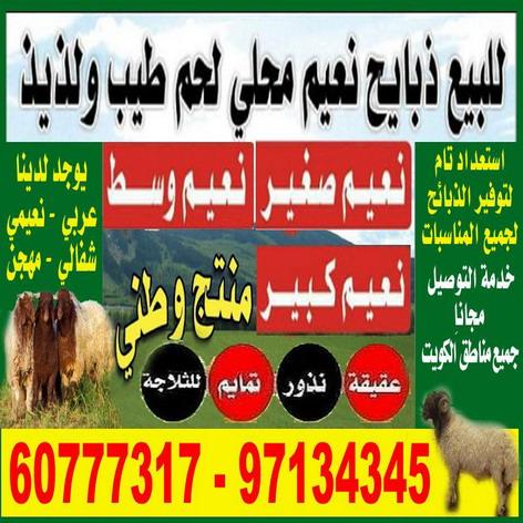غنم – اغنام للبيع بالكويت 60777317