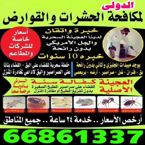 مكافحة حشرات - رش حشرات - رش صراصير - بق - مكافحة حشرات وقوارض - شركة مكافحة  حشرات بالكويت - اتصل 66861337