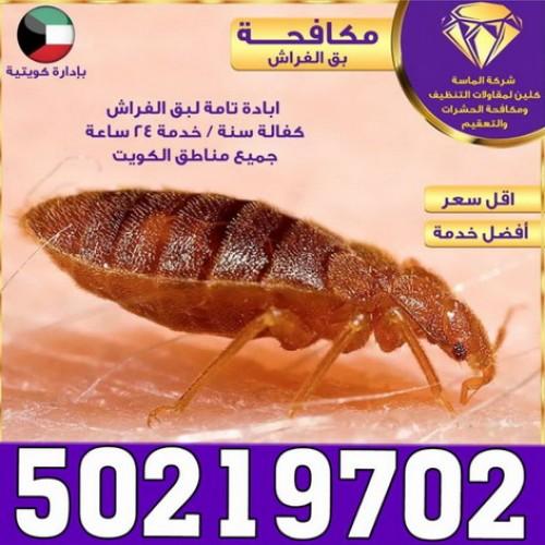 مكافحة حشرات - 50219702 شركة الماسة - شركة حشرات -  مكافحة بق - رش صراصير - شركة مكافحة حشرات - مكافحة فئران - مكافحة حشرات وقوارض